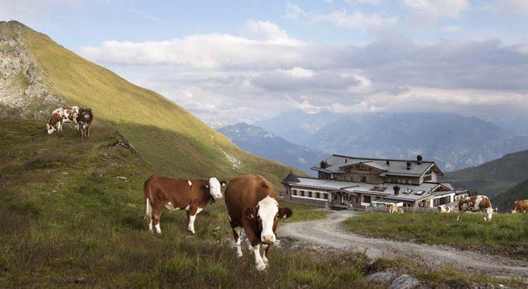 Zillertal ©Tirol Werbung / Bauer Frank