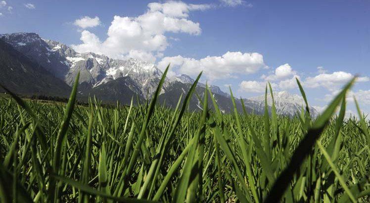 Mieminger Plateau Mountainbike ©Tirol Werbung / Aichner Bernhard