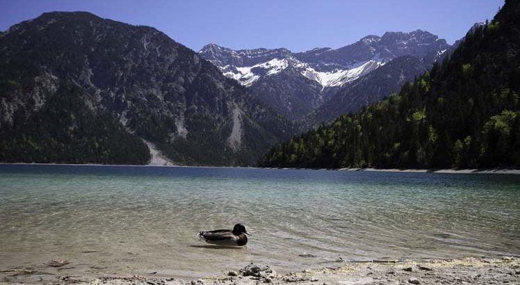 Naturparkregion Reutte ©Tirol Werbung / Aichner Bernhard