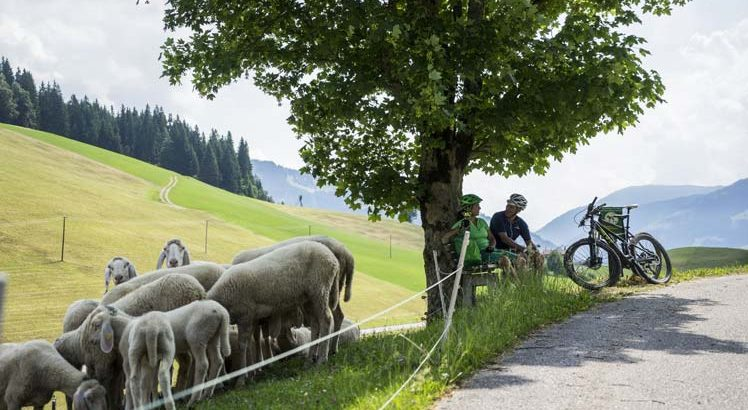 Hohe Salve Mountainbike ©Tirol Werbung / Neusser Peter